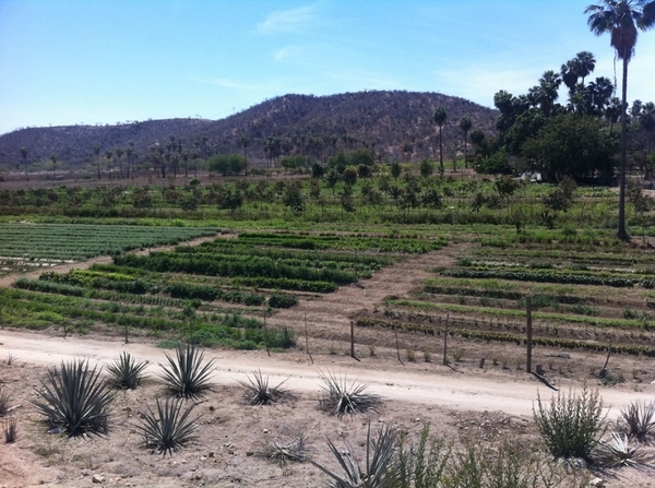 Tamarindo Org Farm 5 miles from San Jose del Cabo is stunning! They give harvesting/cooking/wine tasting classes