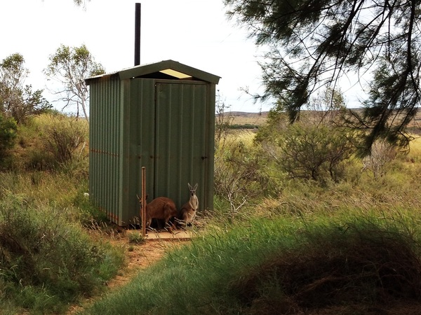 All the kangaroos are standing in line for the bathroom #nerd #austalia