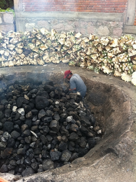 Fidencio Mezcal Distlry, Oax: roasting hearts (piñas) of espadín agave in wood-fired (oak/pine) pit.