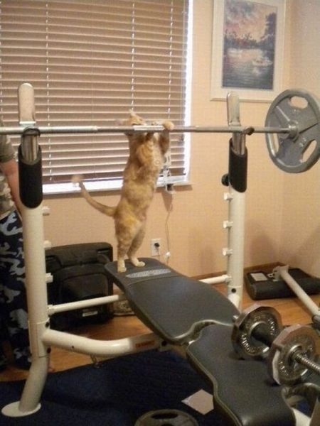 Kitty Workout.
