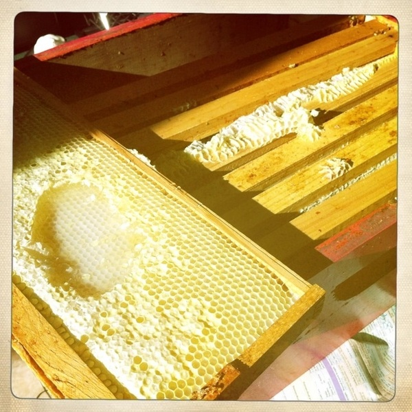 Helped harvest some honey today.