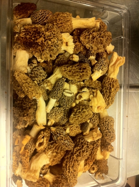Stunning local morels came into our Frontera kitchen today.