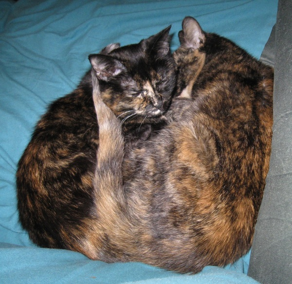 Snuggle-torties [cc: @chaosagent23 @Skep