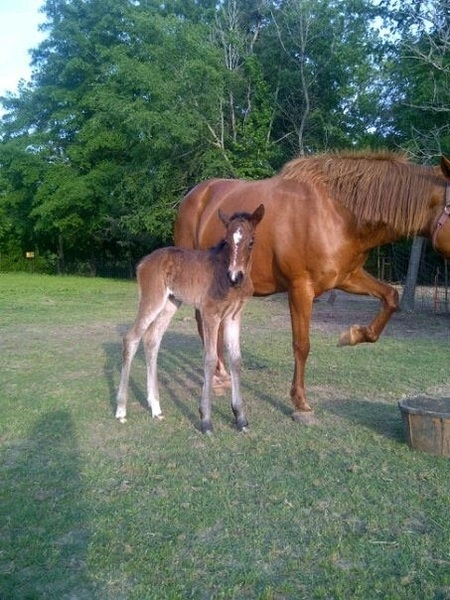 The newest addition to our horse family. # 1 - meet Lilly Lee born Easter Sunday 2012.  Full Mustang. She's a beauty!