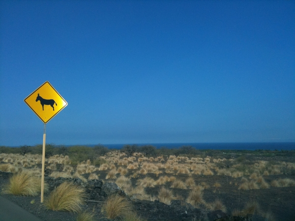 Donkey Crossing! #Kona #Hawaii