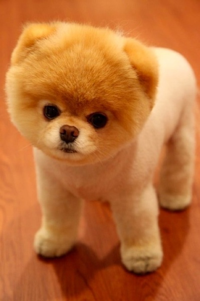 Idc if it's gay, I want this dog.