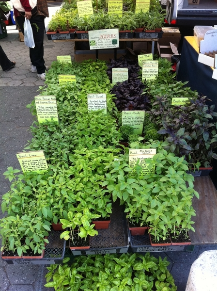 Union Sq Farmers Mkt: one stall has 10 kinds of basil.