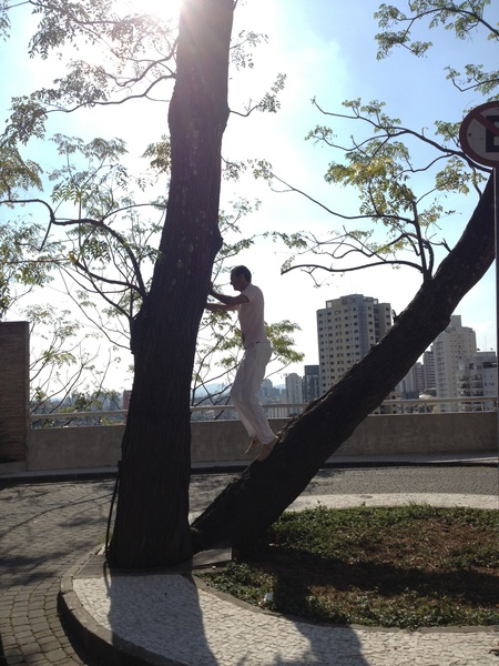 I'm in a tree! (by @SamWierema) in Sao Paulo for #TNWLatam: