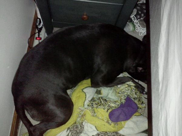"Ruca has been ""hiding under the bed"" since 11:00 last night. Poor dog."