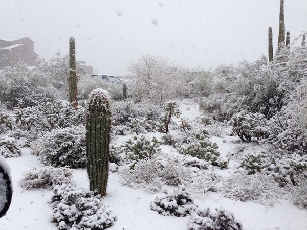 Even the cacti are cold, it's a winter wonderland here in Tucson!