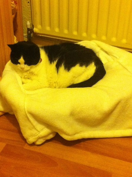 Her new bed cover makes her look like she's not actually black and white!!